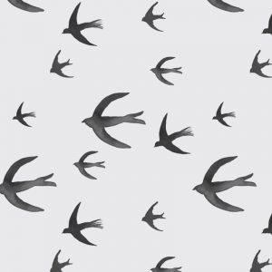 swallows-greyblack