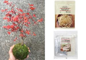 Piantina Koi Koi / Lotus Root chips e Hand Made Vietnam Spring Roll in vendita da Muji