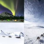 farawell polar artico